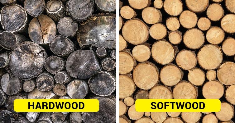 differencebetweenhardwoodandsoftwood