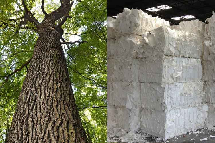 hardwood-and-hardwood-pulp